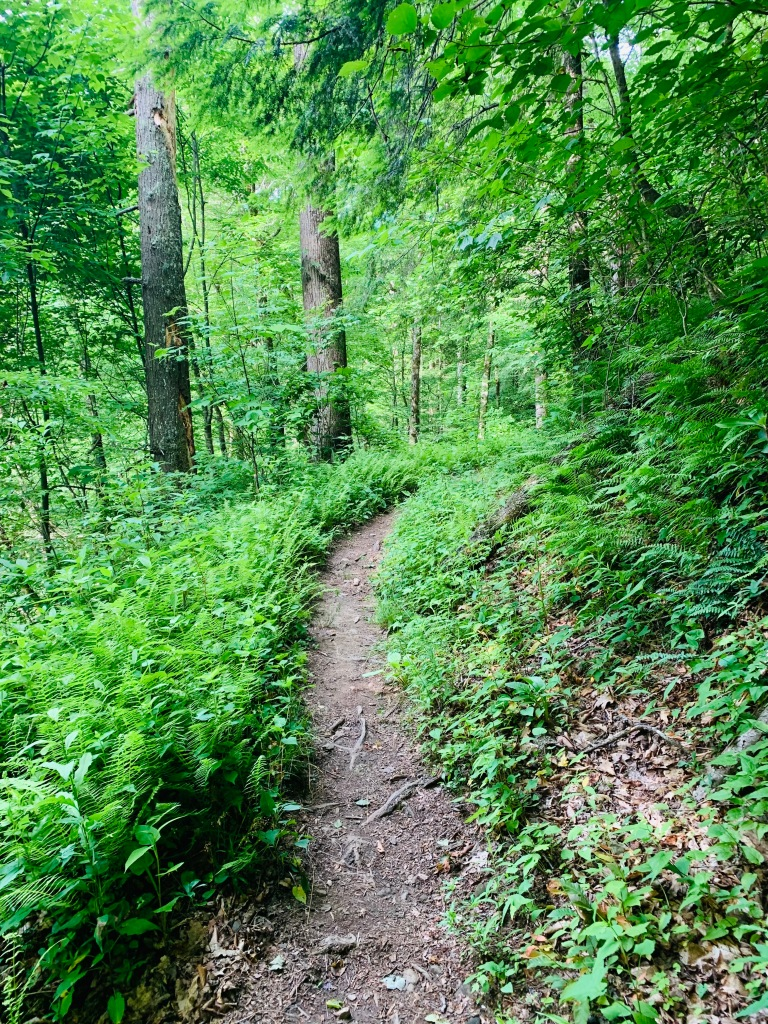 Cabin Flats Trail - trail