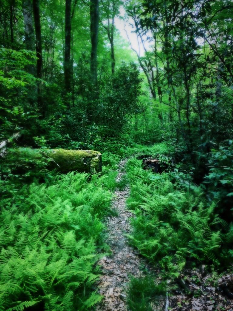 Deeplow Gap Trail - foliage