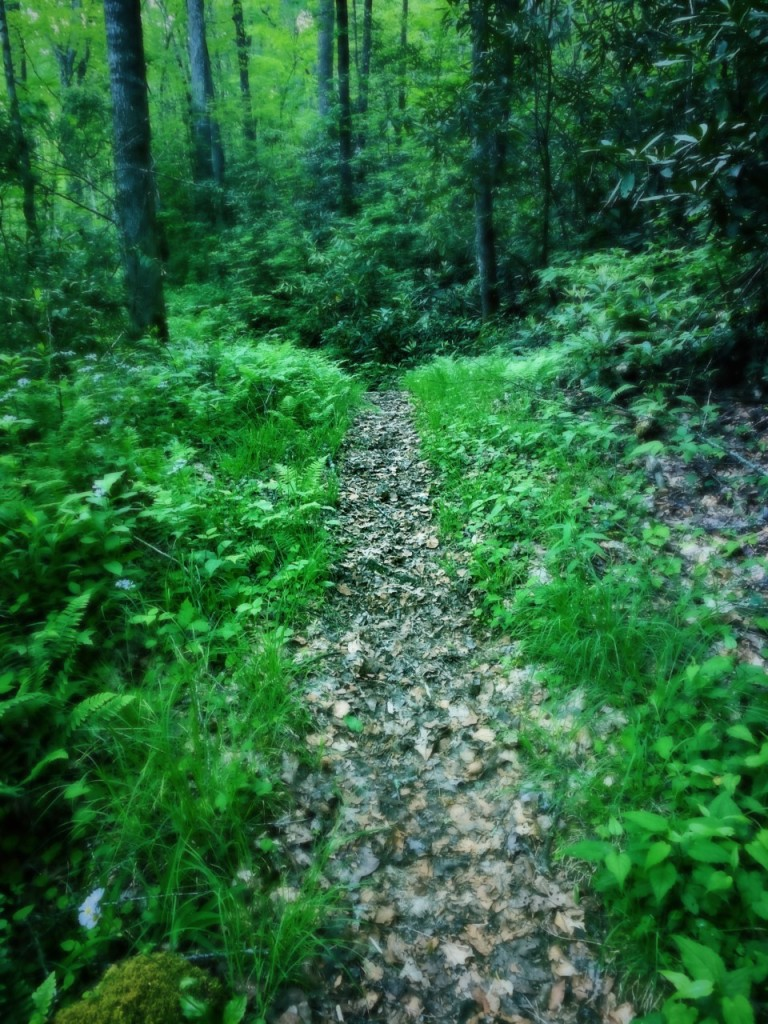 Deeplow Gap Trail - trail with green