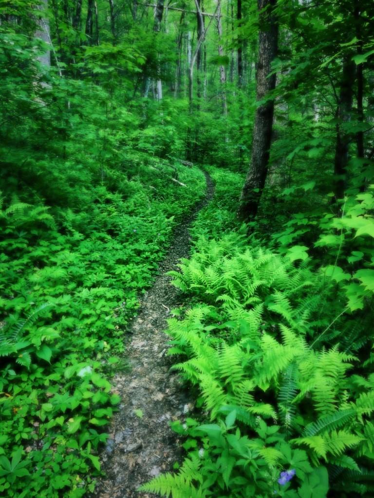 Deeplow Gap Trail - trail