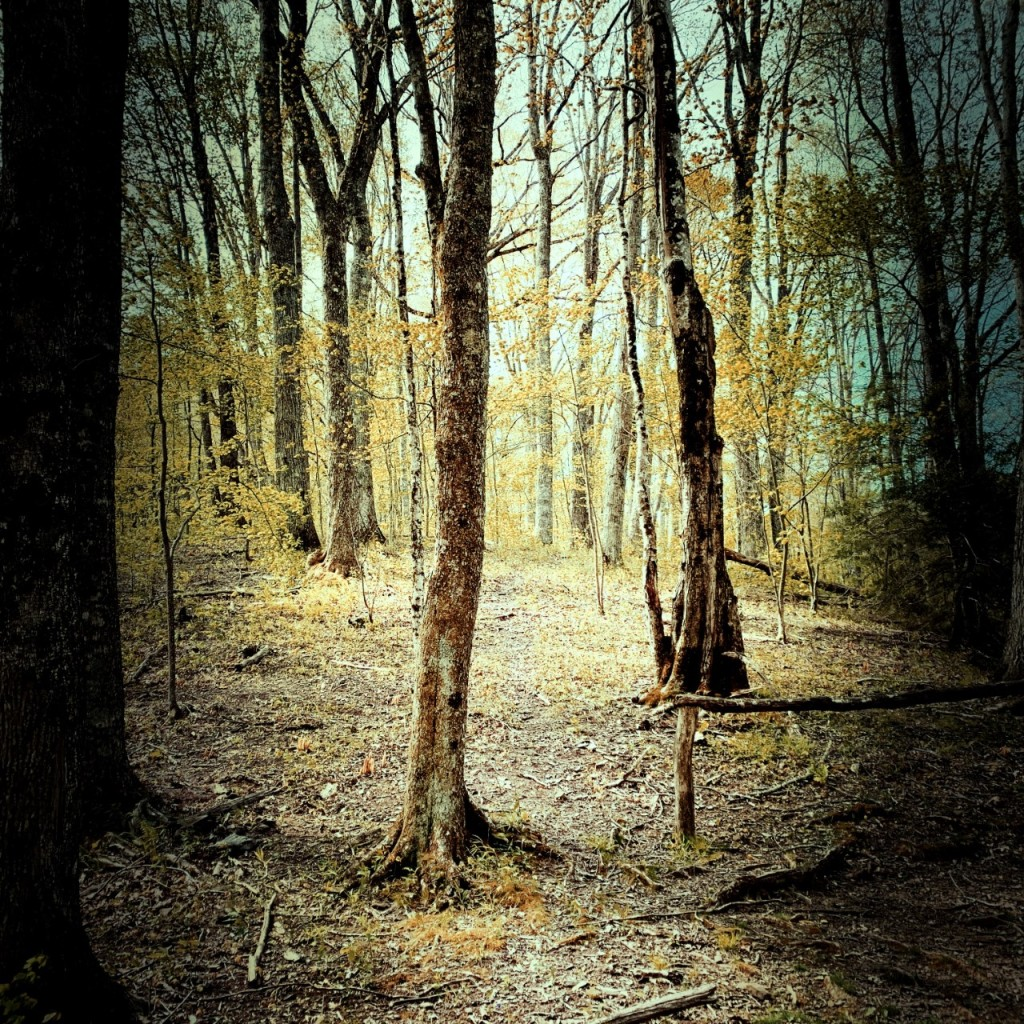 little-cataloochee-trail-foliage