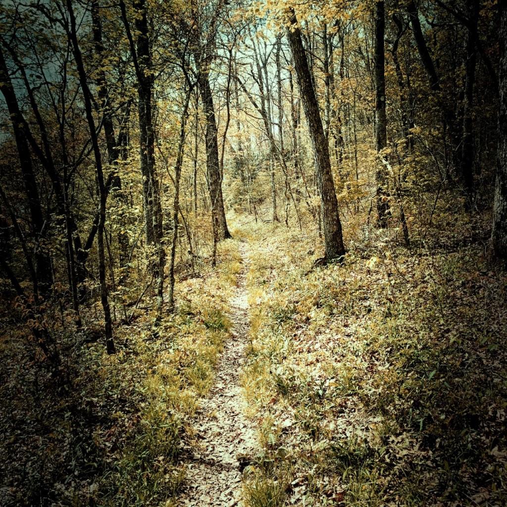 Mingus Creek Trail - trail via ridge