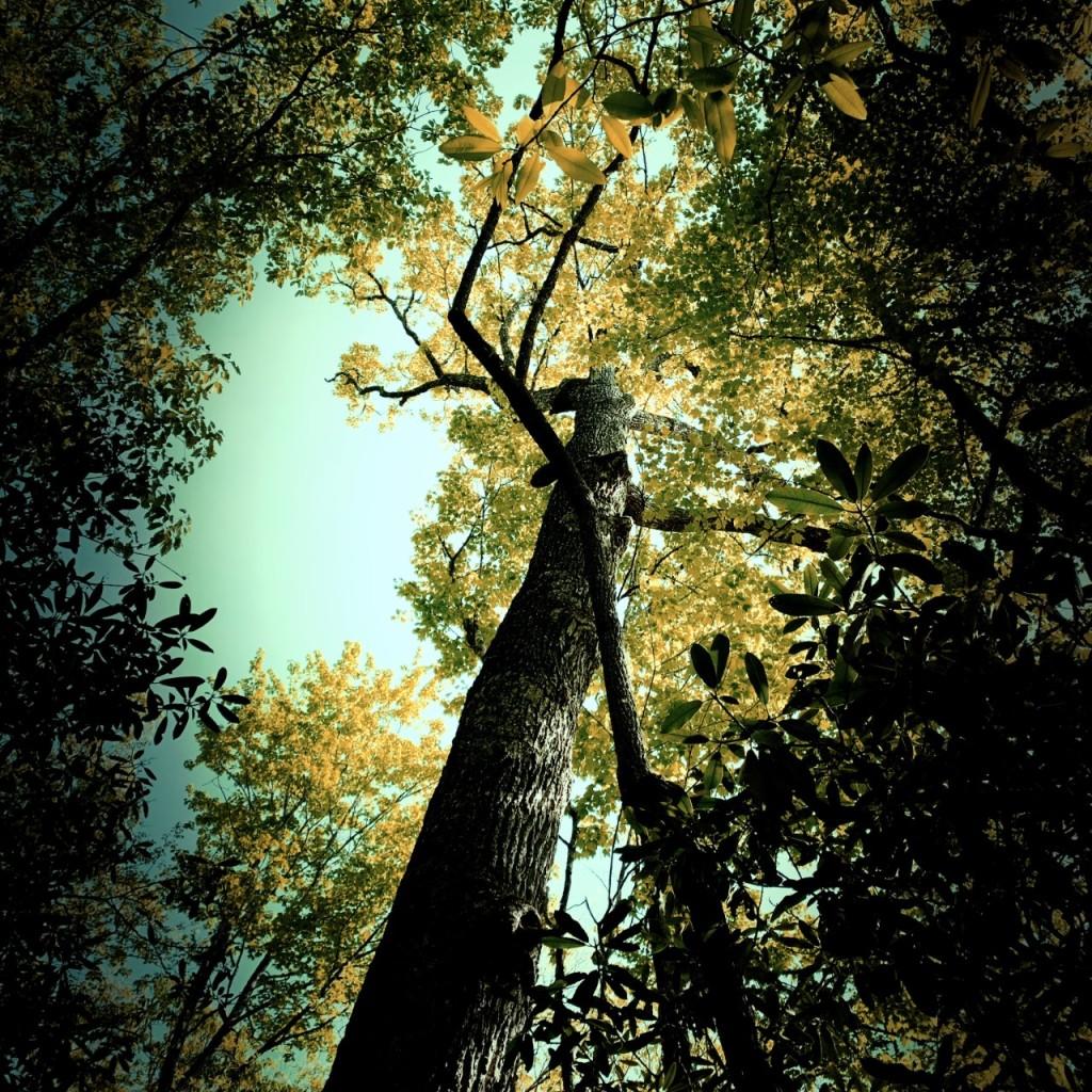 Sunkota Ridge Trail - tree